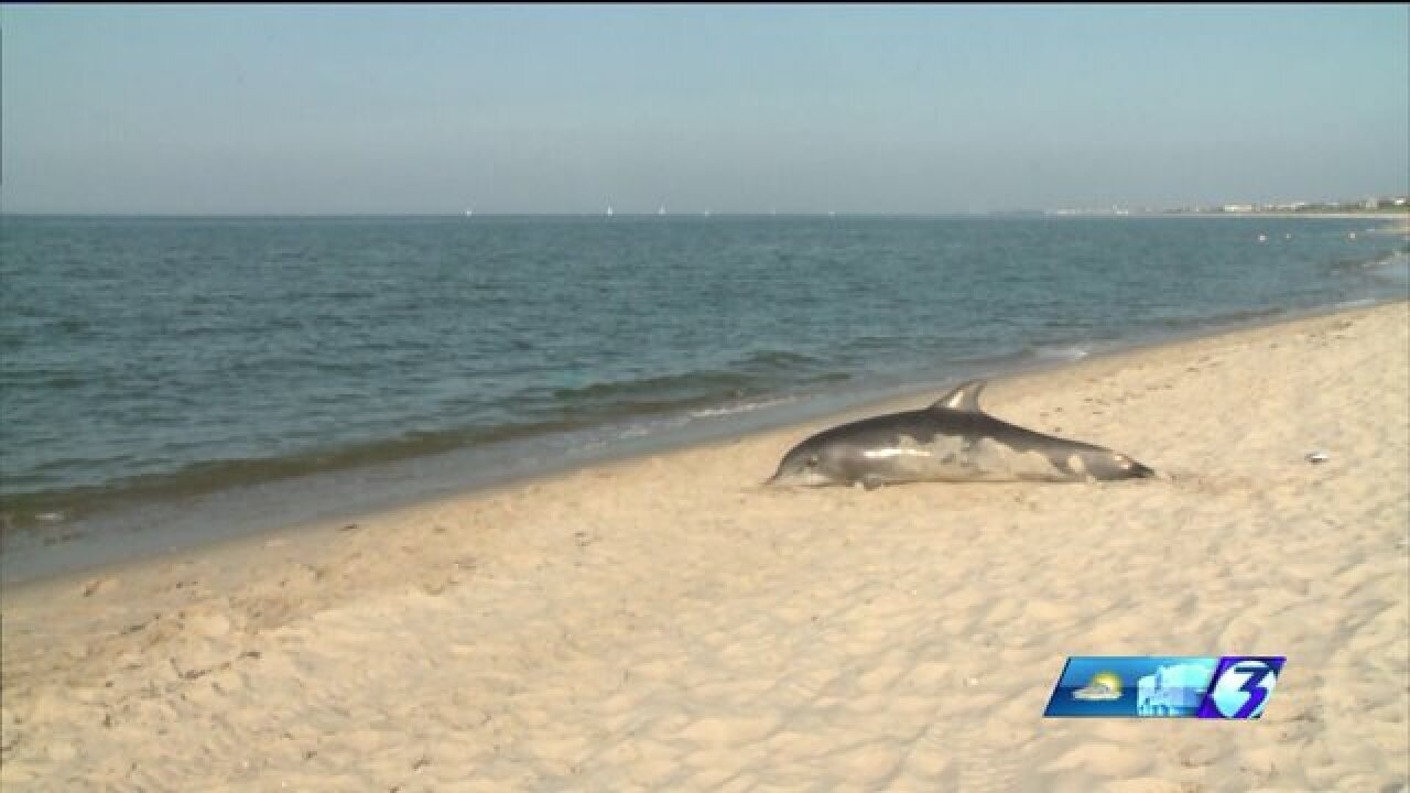 Will hundreds of dolphins die in Virginia again thisyear?
