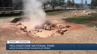 Not a good idea: cooking chicken in thermal features at Yellowstone National Park