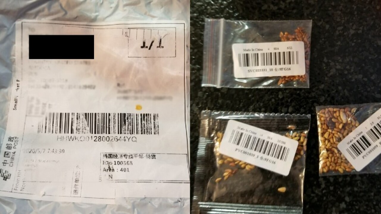 Mystery seeds from china.jpg