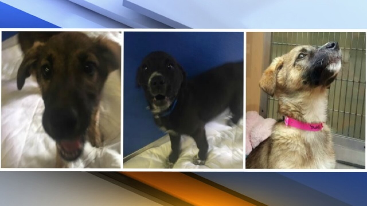 Stolen puppies from shelter found near PHX canal