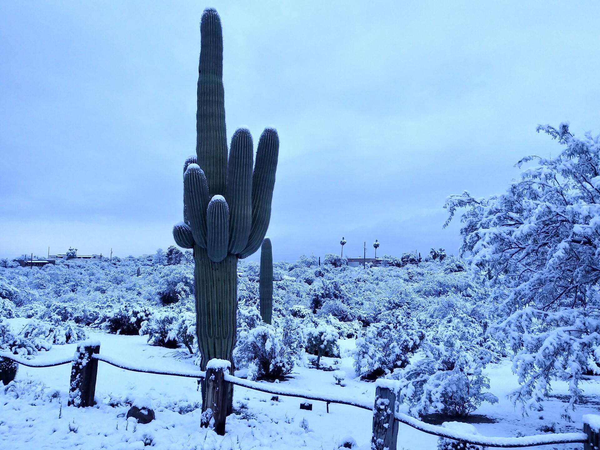 Snow - Todd Koonce.jpg
