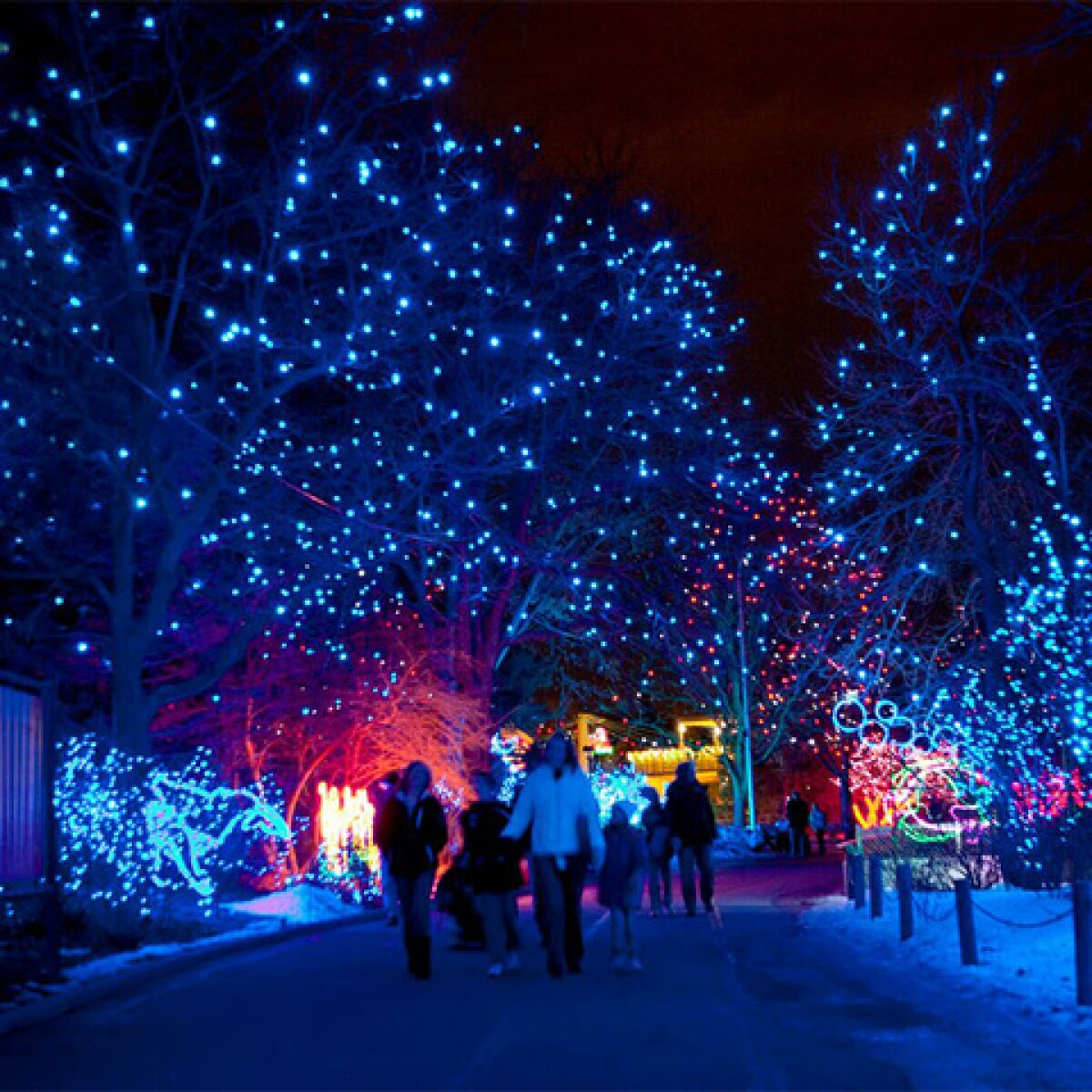 Denver Zoo Lights, Blossoms Of Light And More: 7 Best