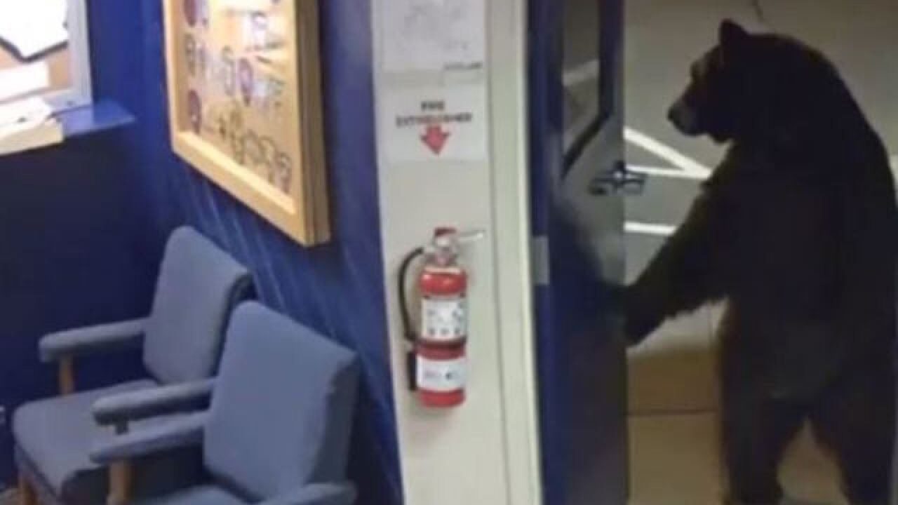 Bear enters California law enforcement facility to inspect vending machines