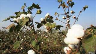 Cotton Festival underway in Ville Platte