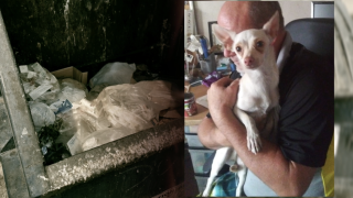 Dogs found in Mesa dumpster