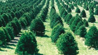 Christmas trees available now on Amazon