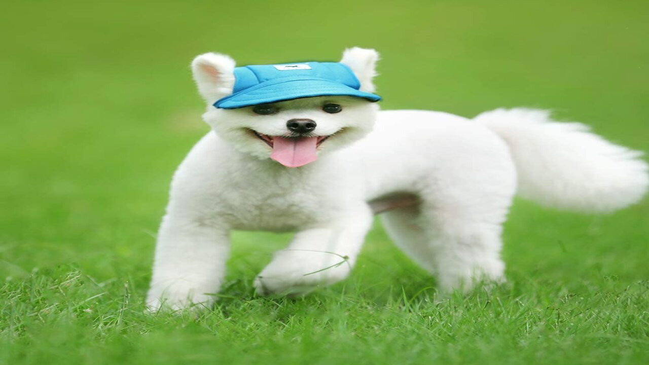 Keep Your Pup Cool This Summer With Baseball Caps Made Just For Dogs