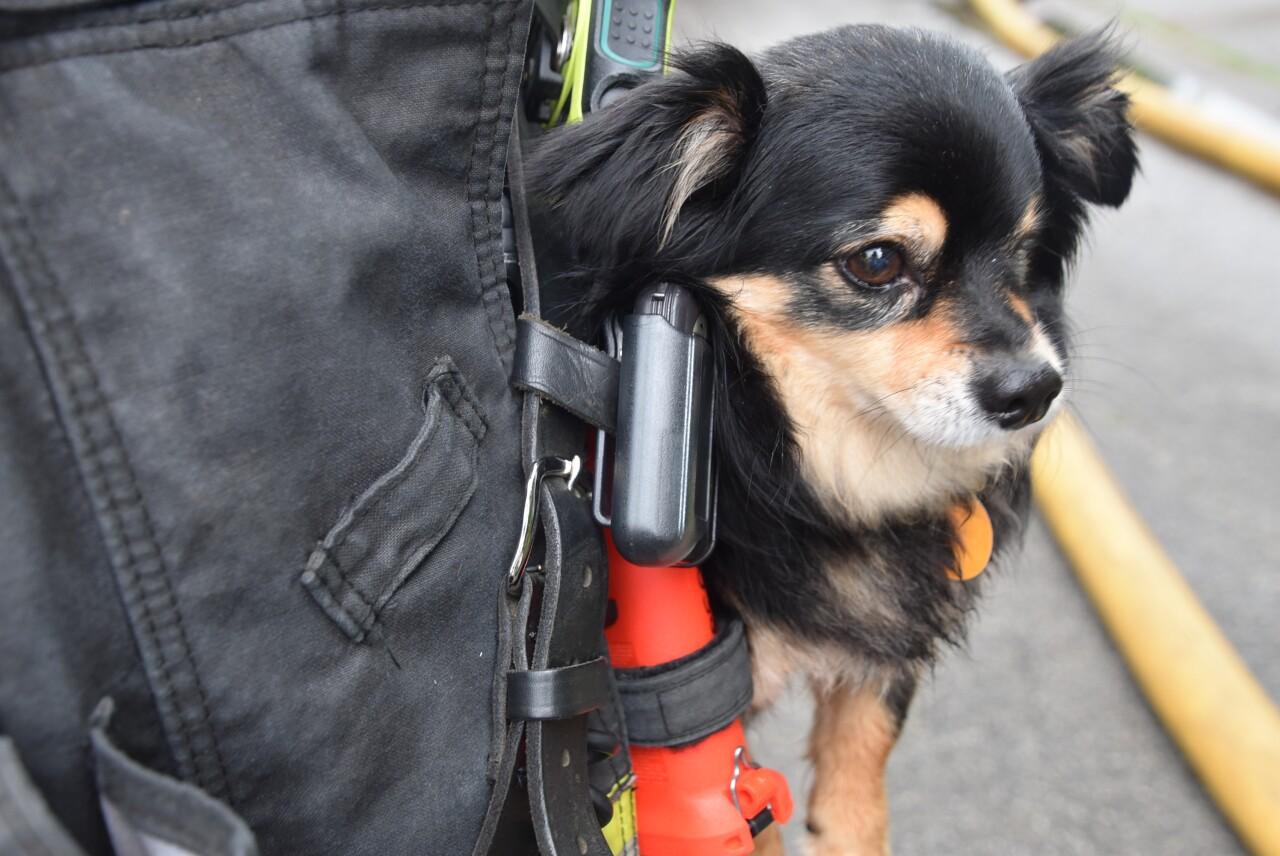 dogpocket.jpg