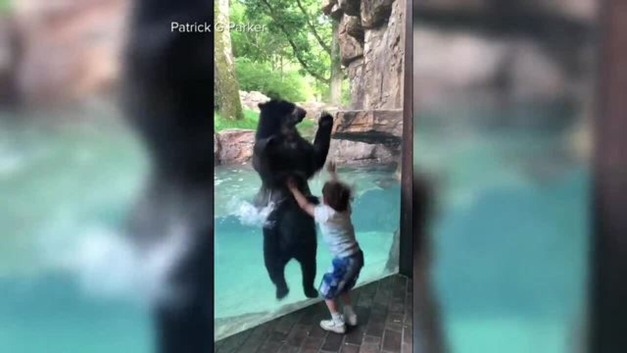 Video shows bear, 5-year-old jumping together