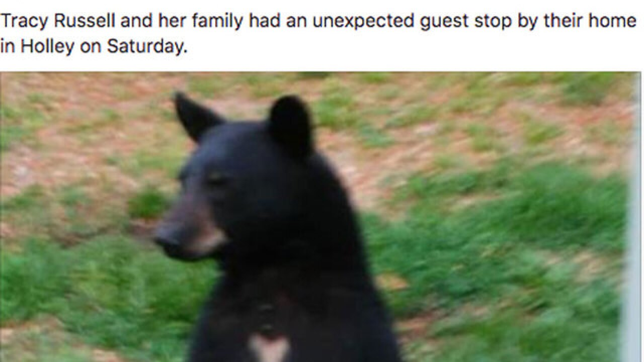 Bear Scare: Florida family gets 12-hour visit at their home