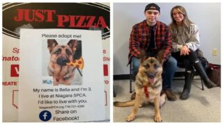 Pizza Shop Is Putting Photos Of Adoptable Dogs On Its Pizza Boxes