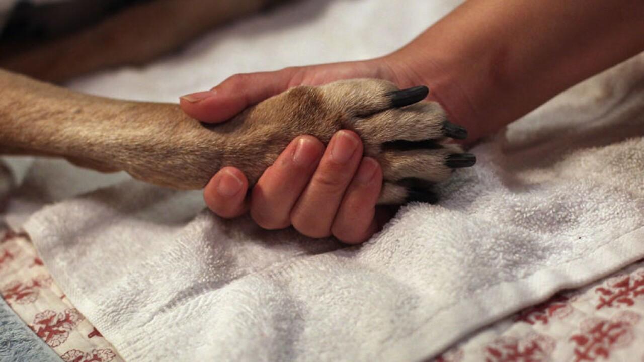 dog paw human hand