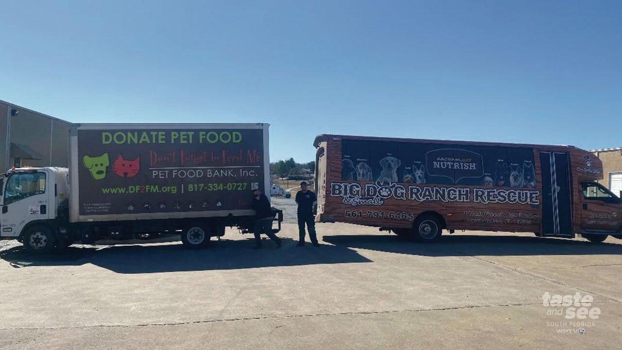 Dogs rescued from the Texas winter storms arrive at Loxahatchee Grove shelter.