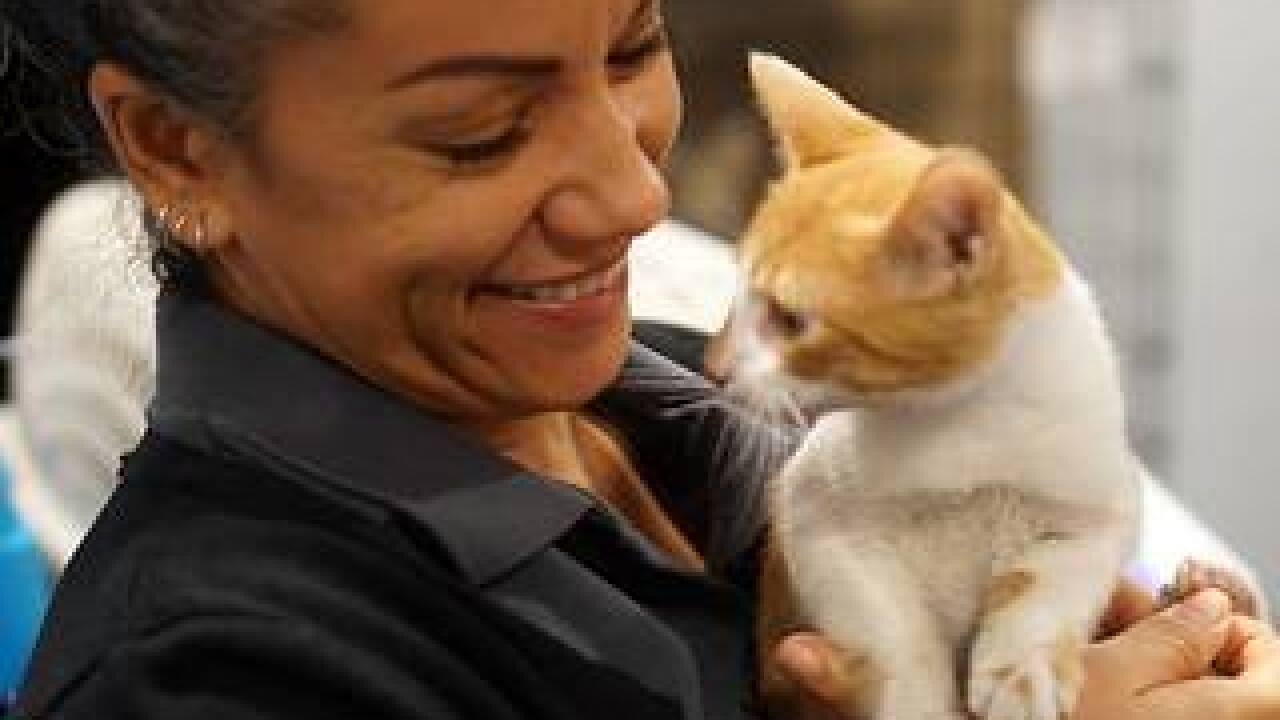Kittens rescued from Puerto Rico up for adoption