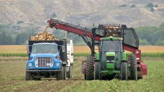 Montana AG Network: Bullock order aims to help sugar beet farmers