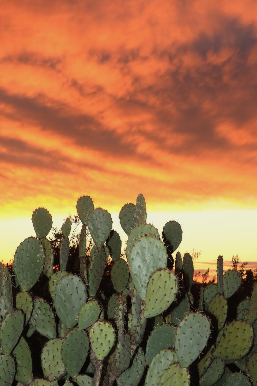 January 31: Tucson sunset photos