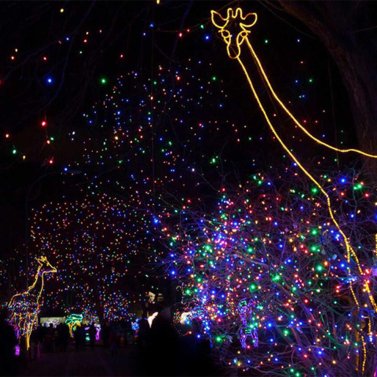 Denver Zoo Lights Preview Weekend And More: 5 Things To