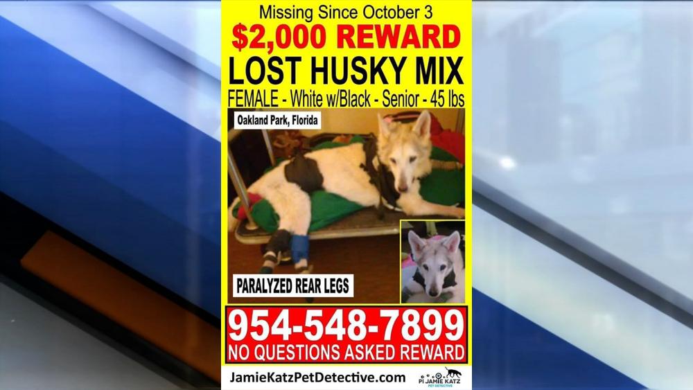 reward-lost-dog.png