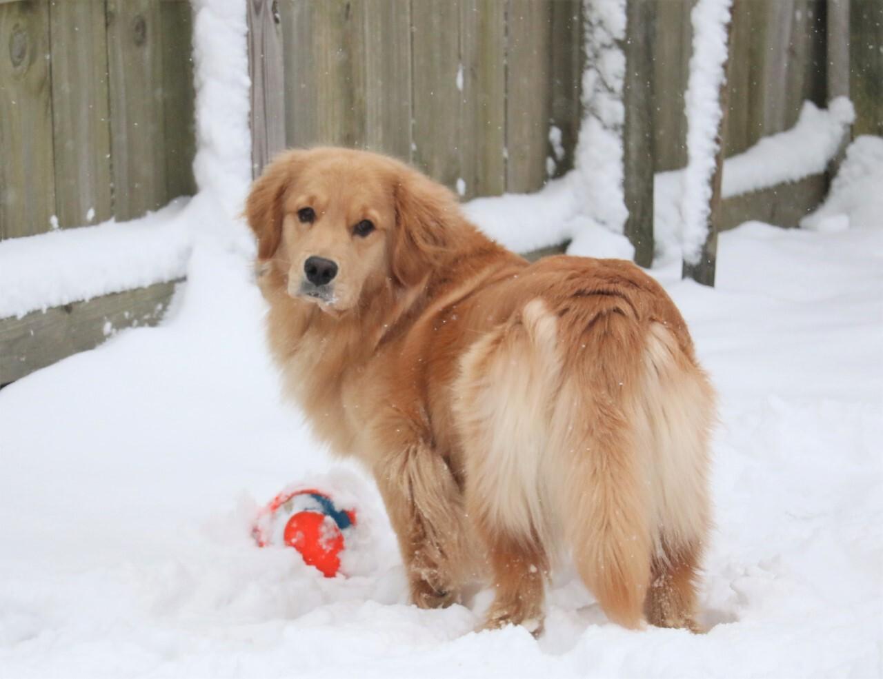Doggies first snow. Chesapeake.jpg