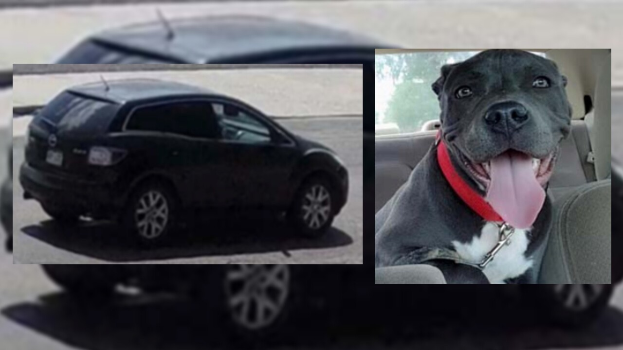 Aggravated Robbery of a Dog