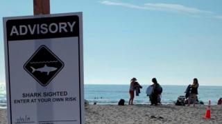 Shark advisory
