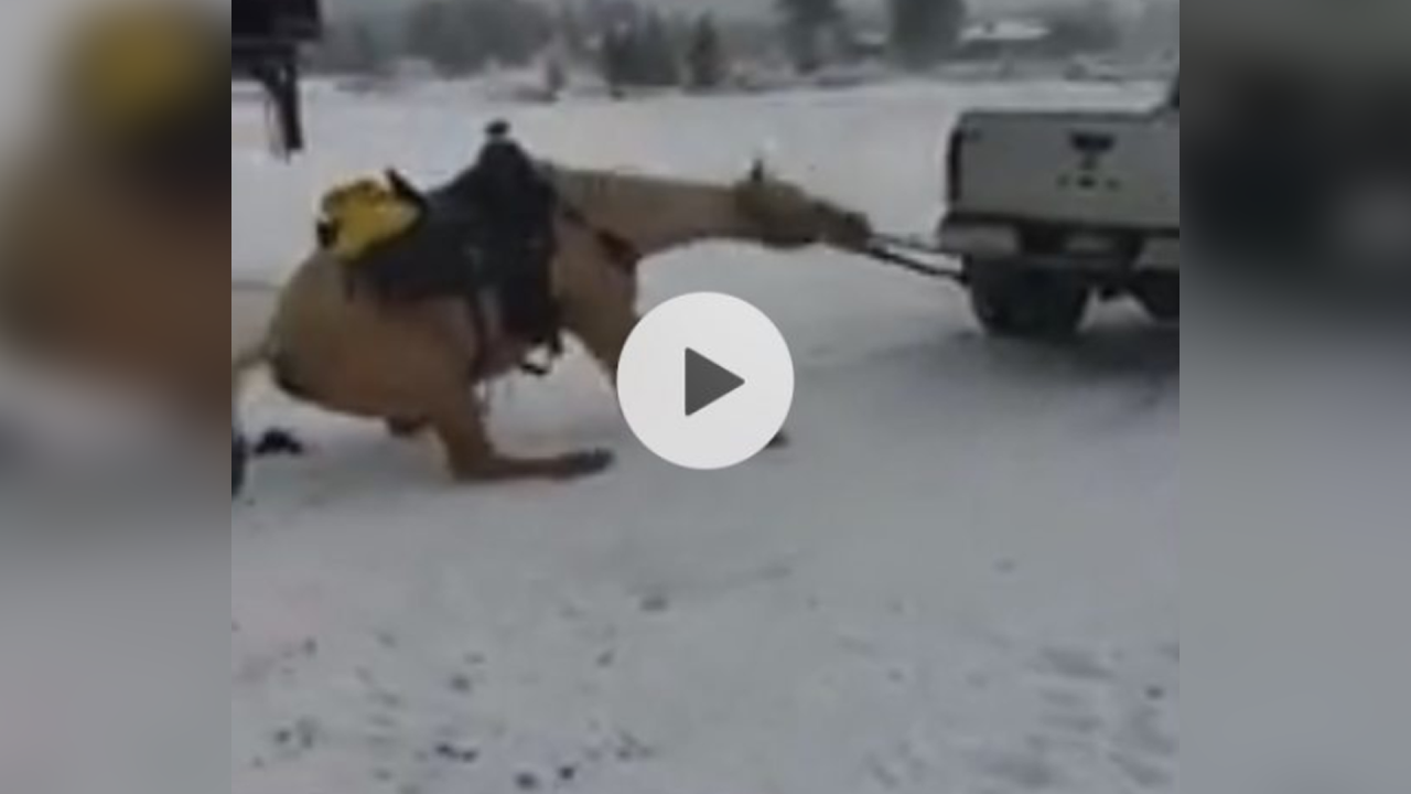 2 people charged after disturbing video shows horse being dragged behind truck in Colorado