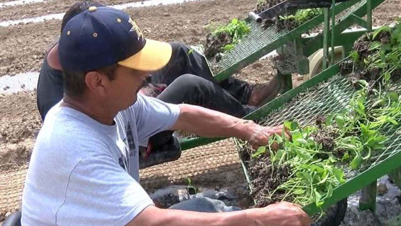 Fishers urban farm will help feed those in need