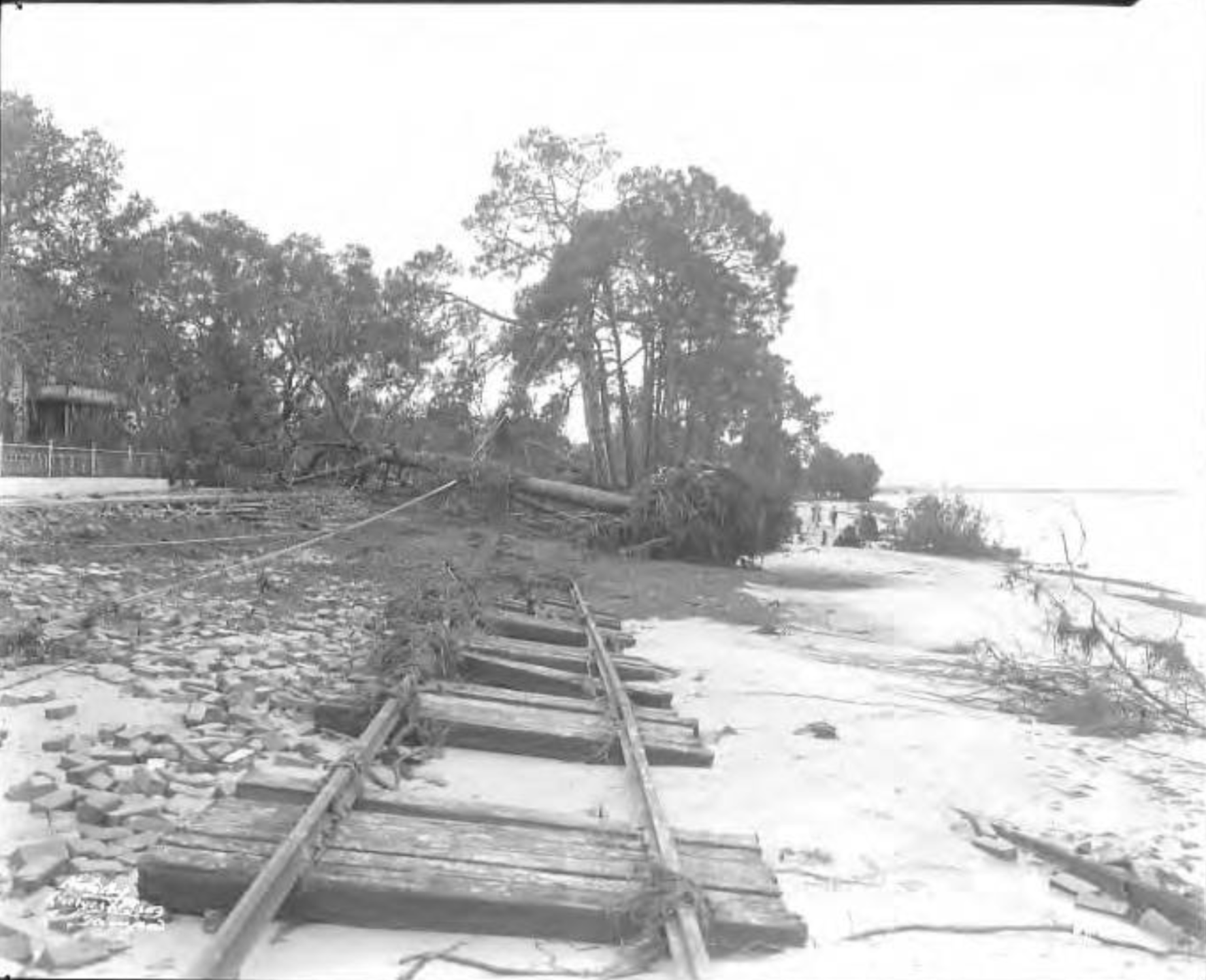 View of hurricane damage to trees, streetcar tracks, and road surface on Bayshore Boulevard after storm.png