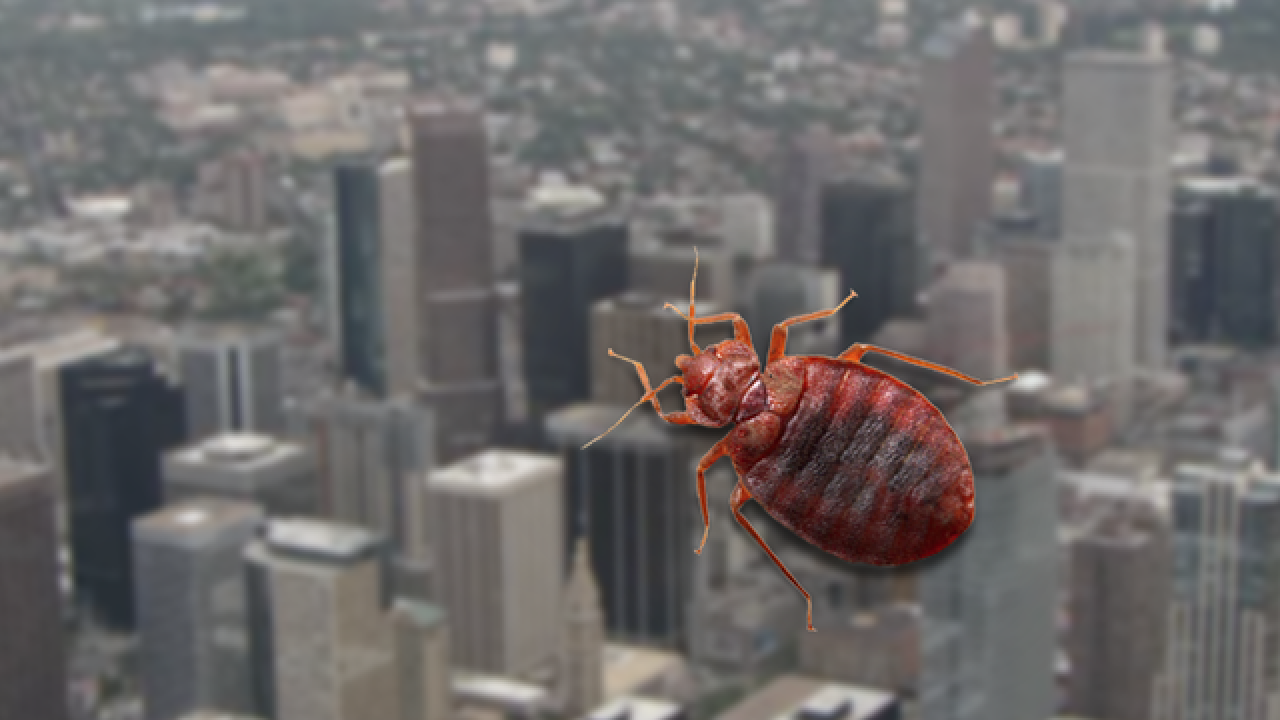 Denver is 5th most bed bug-infested city in country