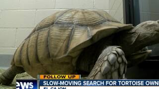 Slow-moving search for owner of El Cajon tortoise
