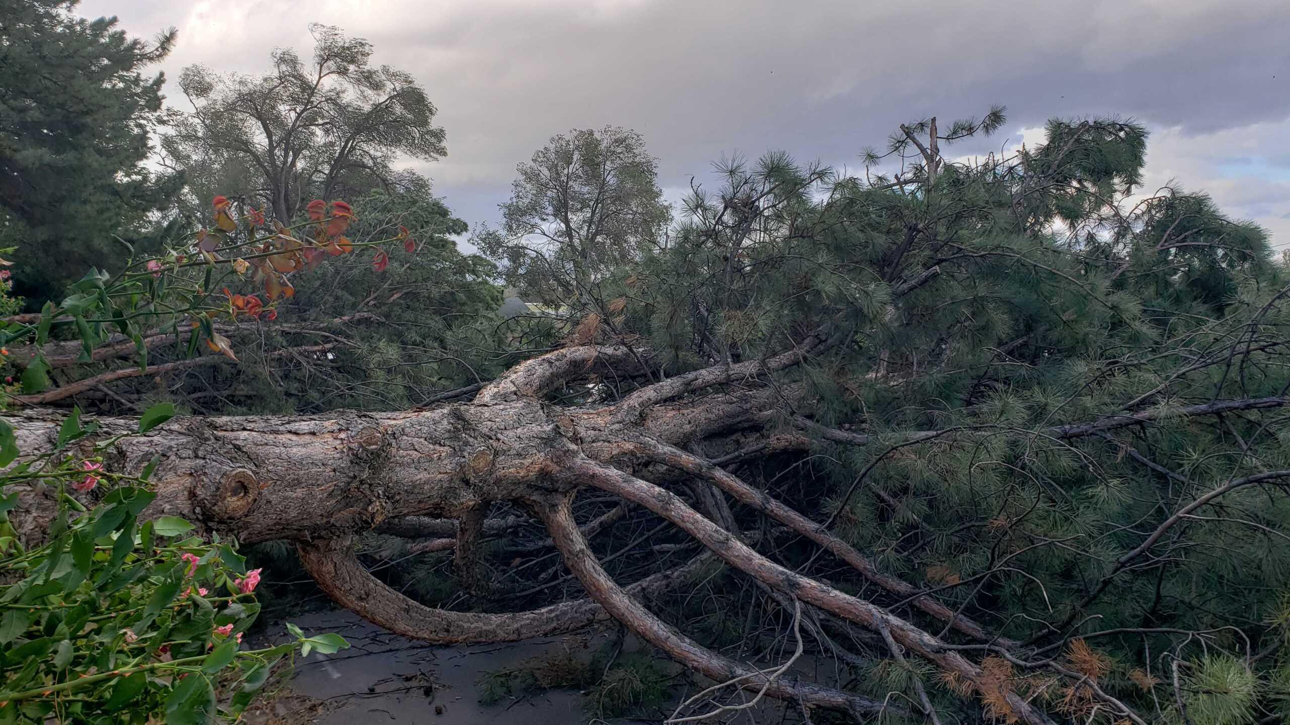 Wind Damage in Ogden (5).jpg