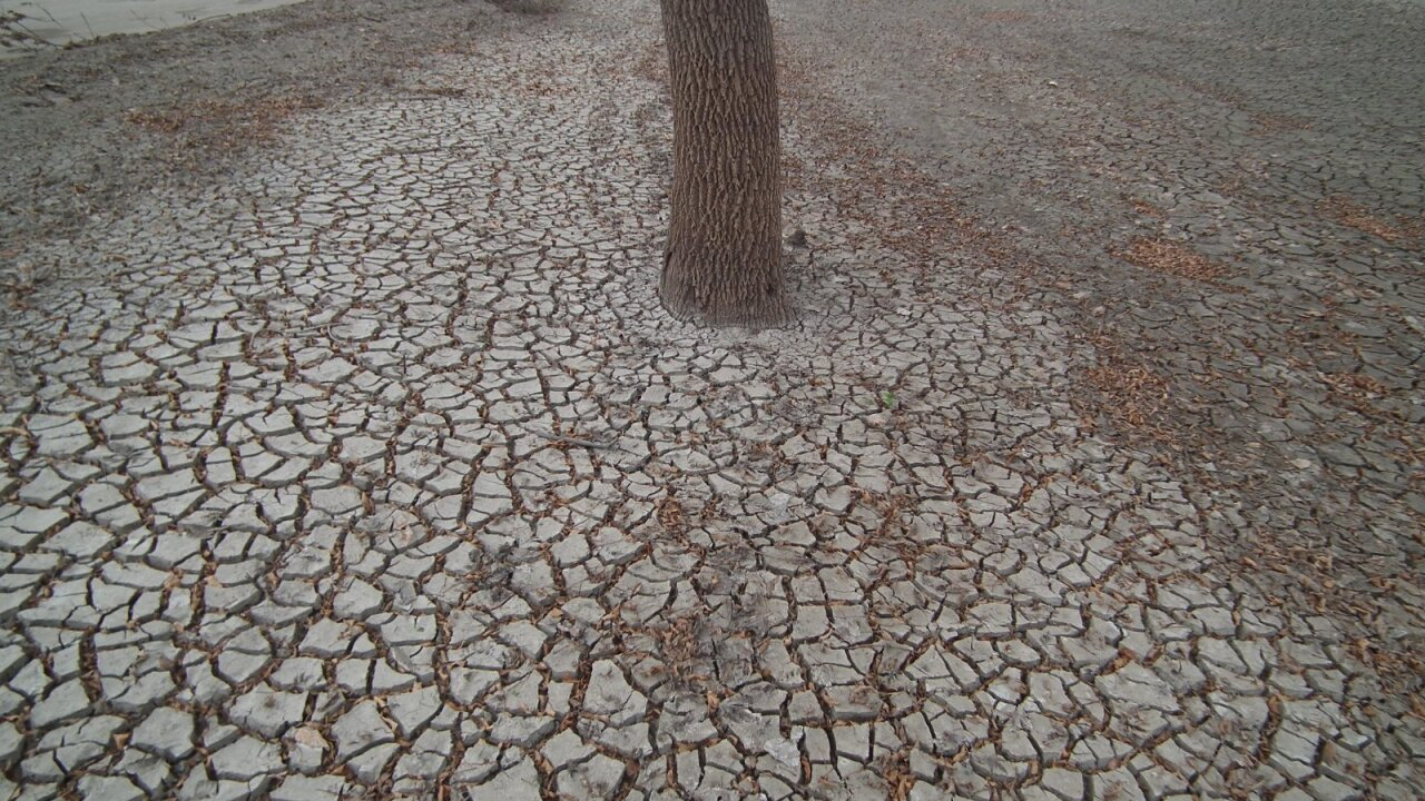 The variability in Nebraska's weather can make it a challenging environment for trees. The effects of climate change are only going to make it harder, according to the University of Nebraska.