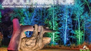 VAZOO_Zoolumination Promo Sloth.jpg