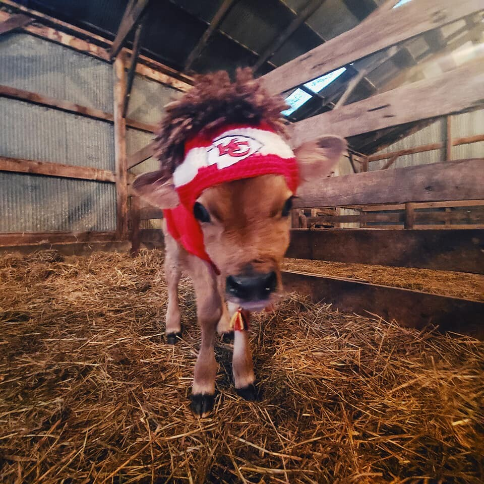 Photos: Newborn calf pledges allegiance to Kansas City Chiefs, sports Patrick Mahomes' hairstyle