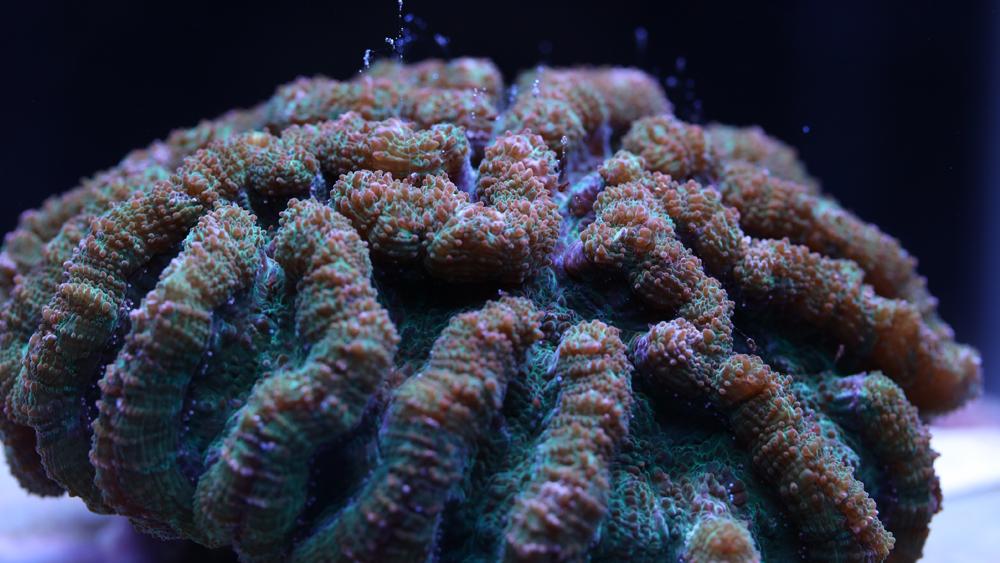 cactus-coral2.png