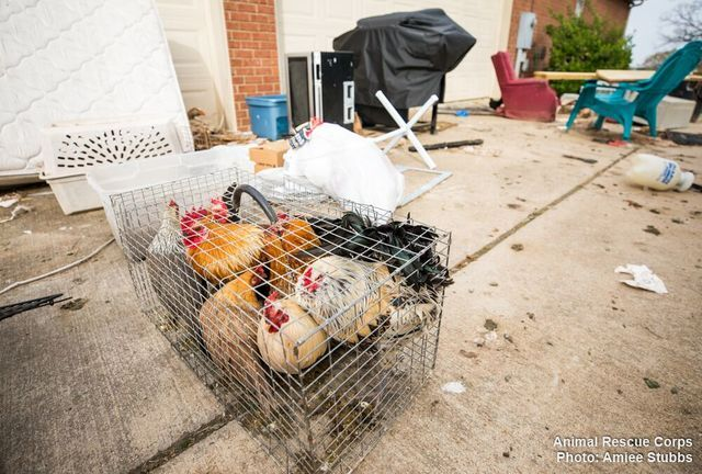 Photos: 150 Animals Rescued From Atwood Property