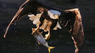Kentucky parks announce dates for eagle watch tours