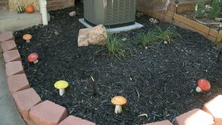 Littleton man faces lawsuit from HOA over garden mulch.png