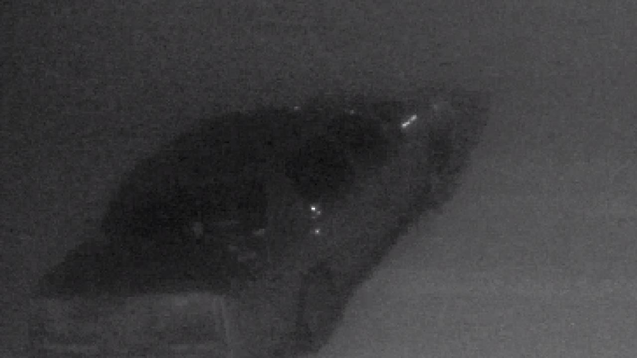 Helena Police Dept. investigating vandalism at two schools