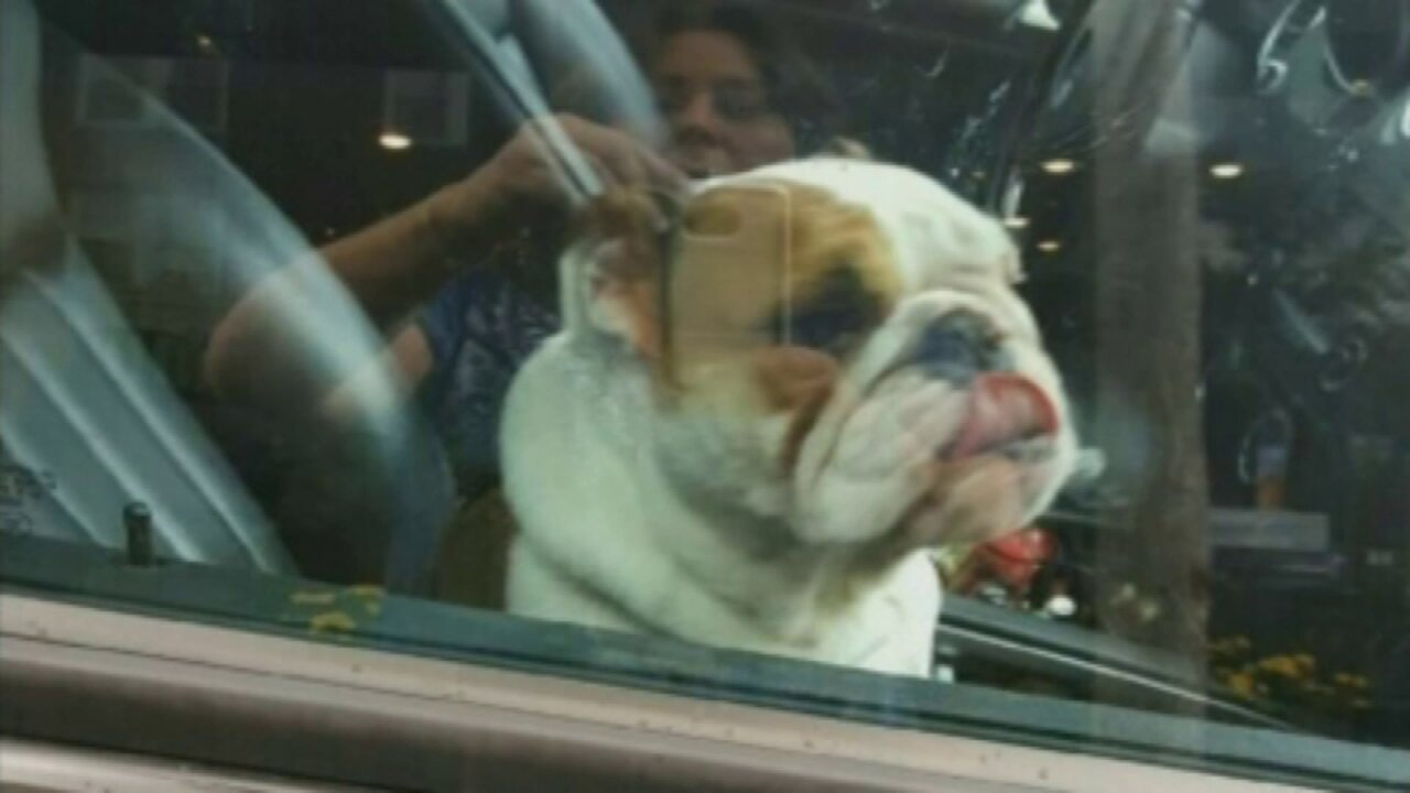 Animal shelter warns citizens to 'never leave pets in hot cars'