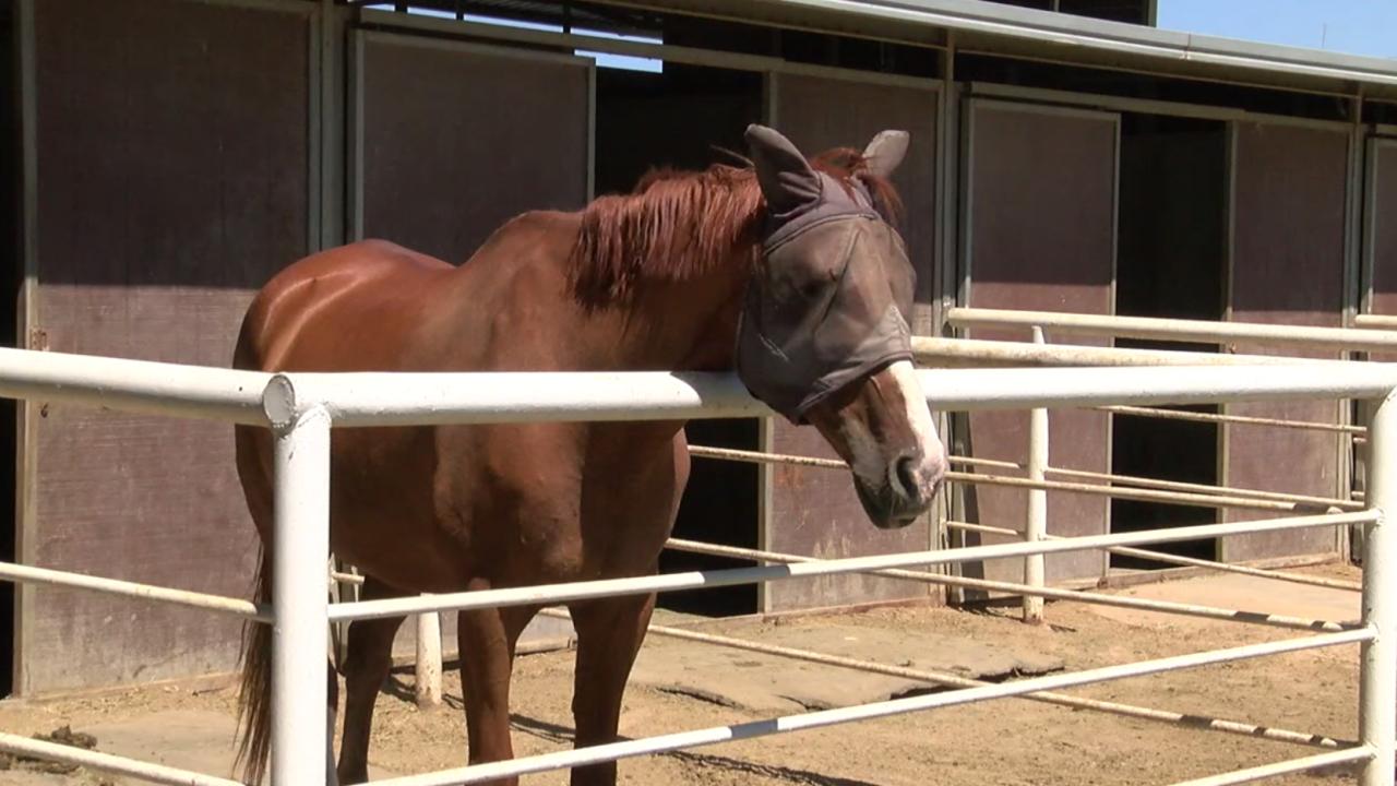 M.A.R.E. Therapeutic Riding Center