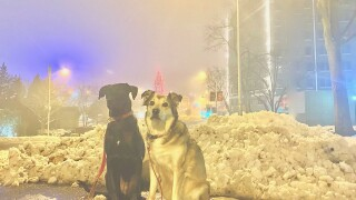 Rainbow & Sunny Show Us The Dense Fog