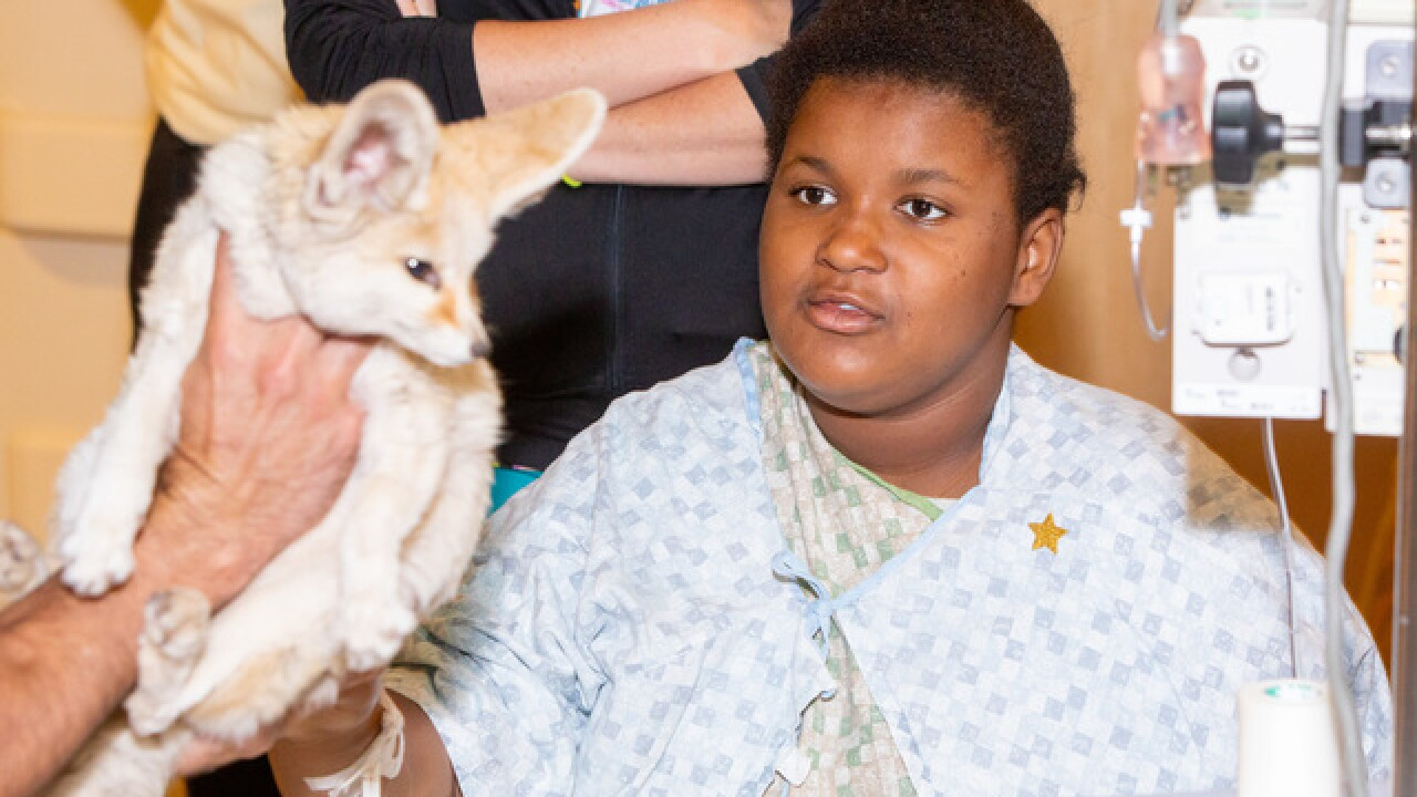 Kids at TMC get a visit from zoo animals