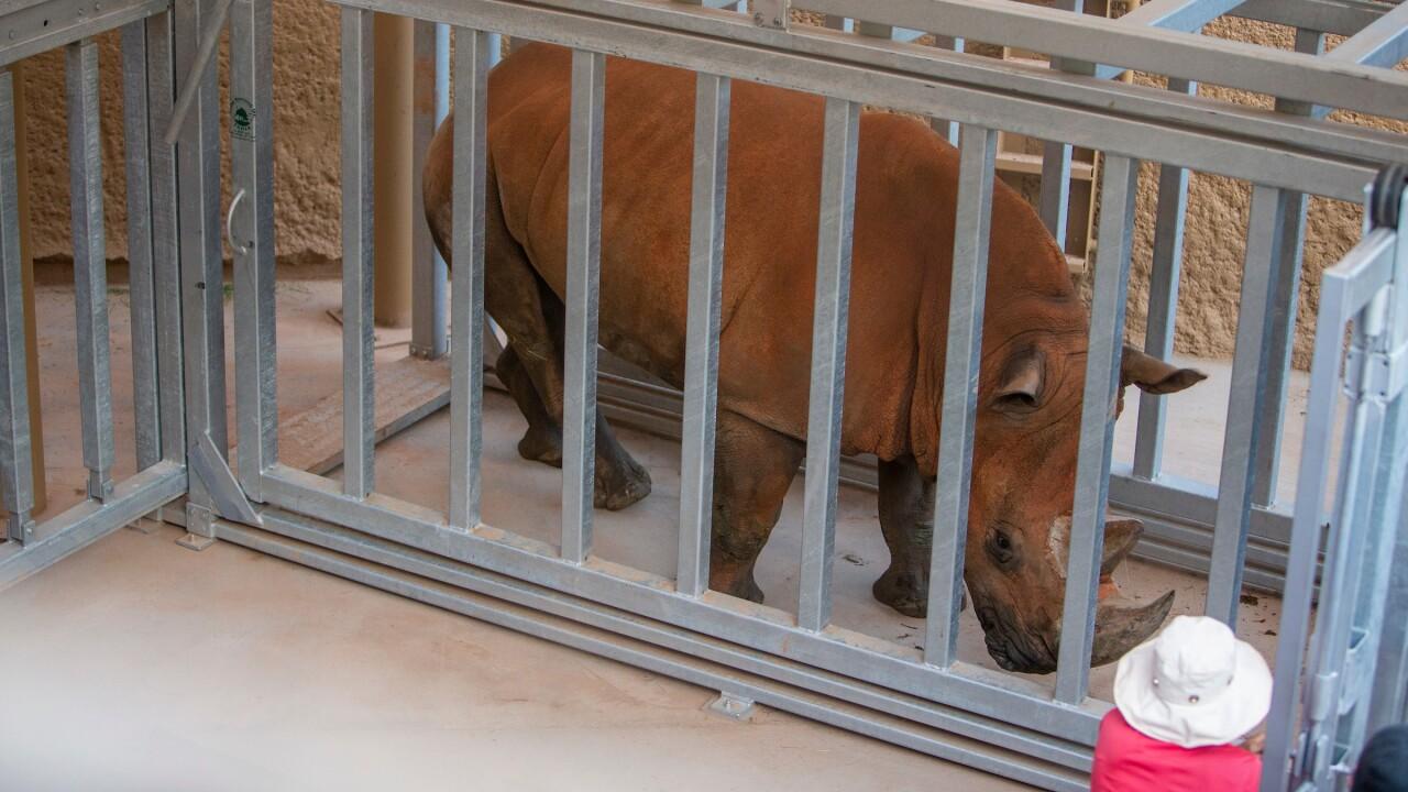 Howie_40.jpg phoenix zoo rhino