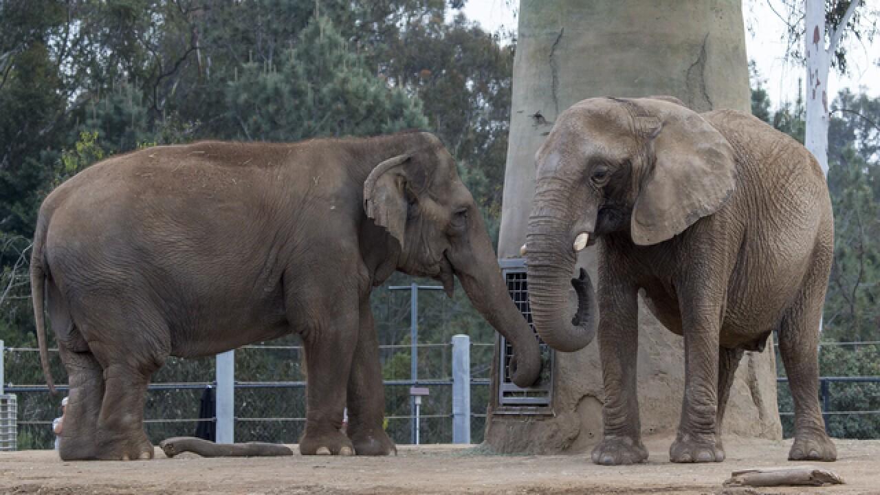 Mila the elephant found dead at San Diego Zoo