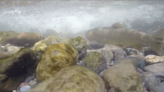 What are 'Hoot Owl' fishing restrictions and why they matter for Montana rivers