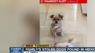 Dogs stolen from La Mesa, found in Mexico