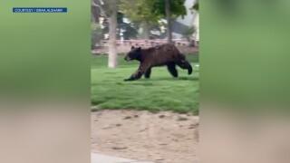 bear in boulder.jpg