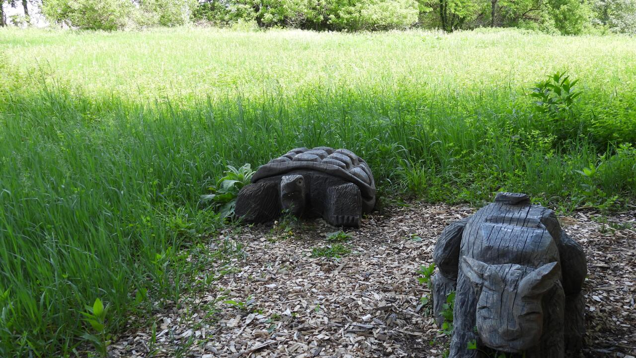 Tortoise and hare wooden sculptures along the South Table Creek trail..JPG