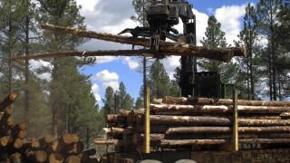 Arizona-Forest Restoration